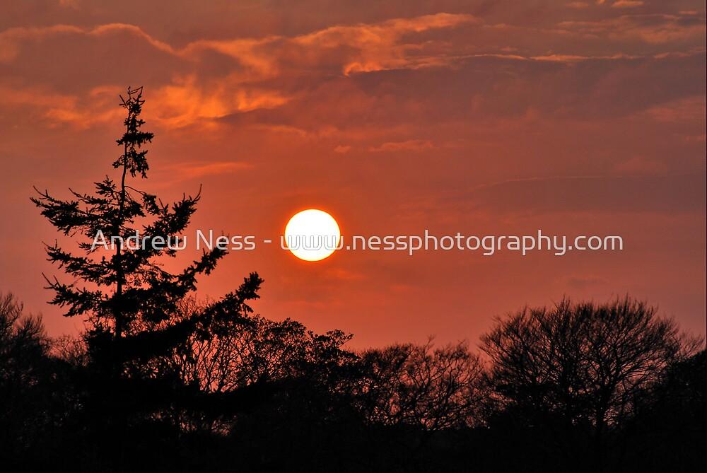 Springtime Sunshine by Andrew Ness - www.nessphotography.com