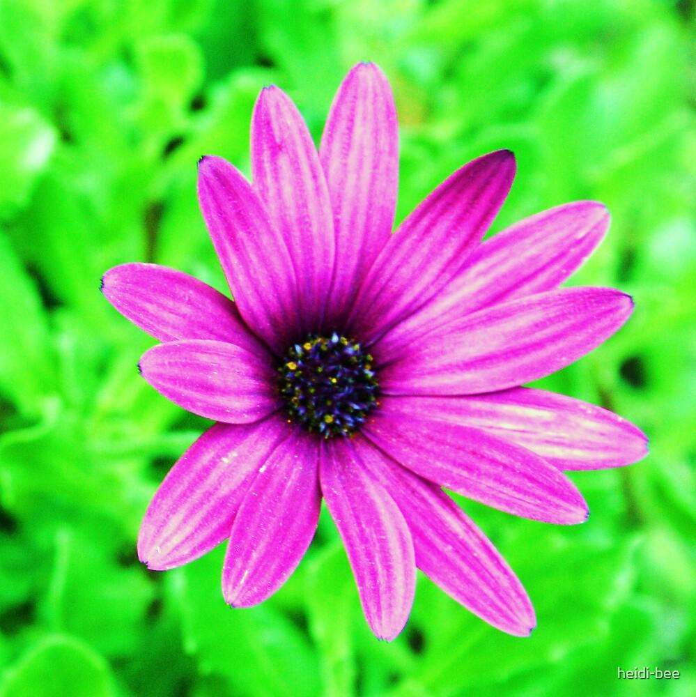 Loud Daisy by heidi-bee