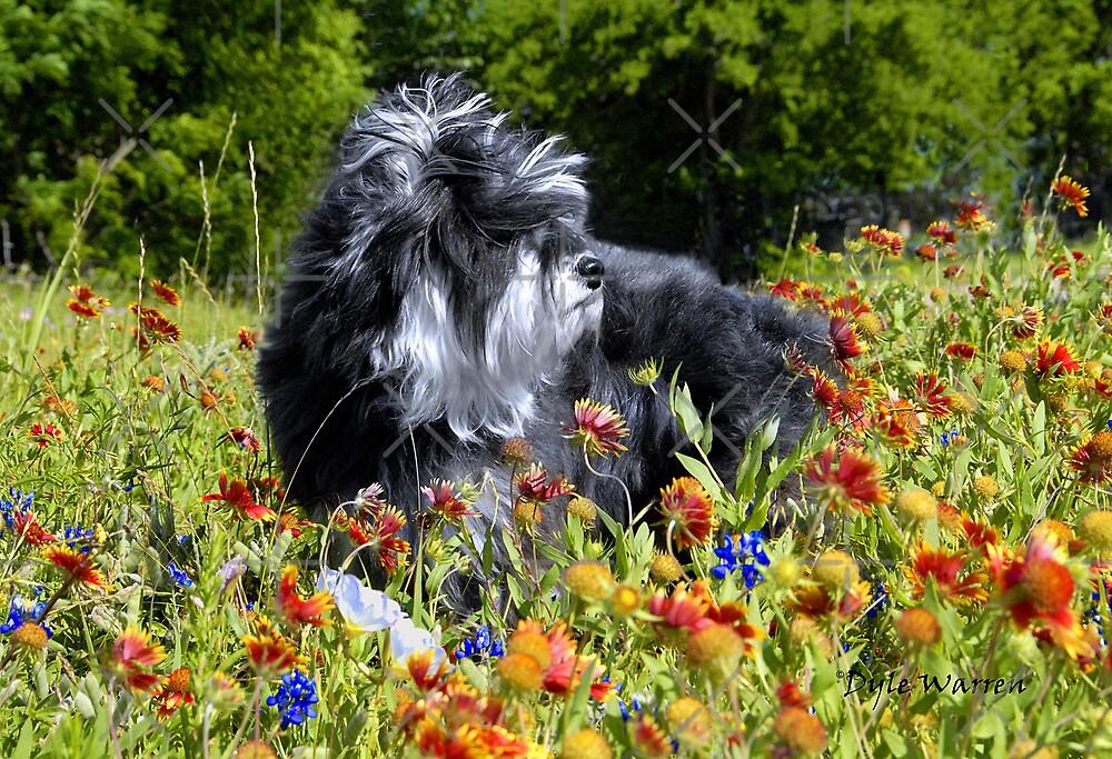 Cloey in the Flowers   by Dyle Warren