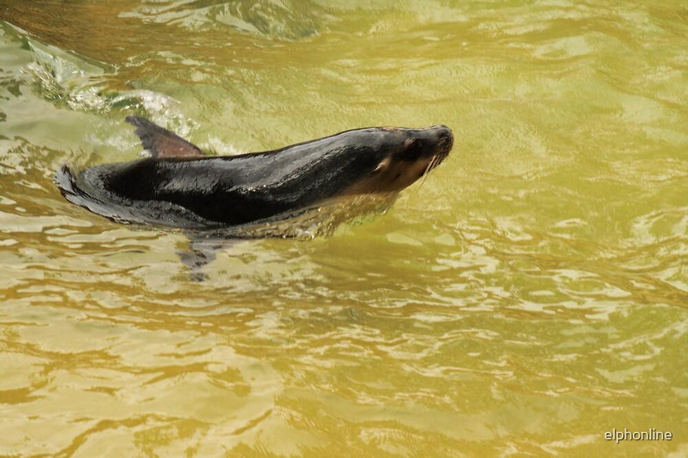 Seal having fun. by elphonline