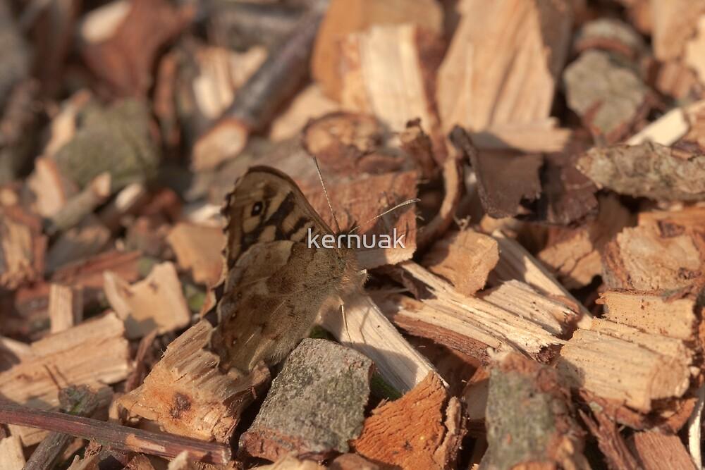 Speckled Wood Butterfly by kernuak