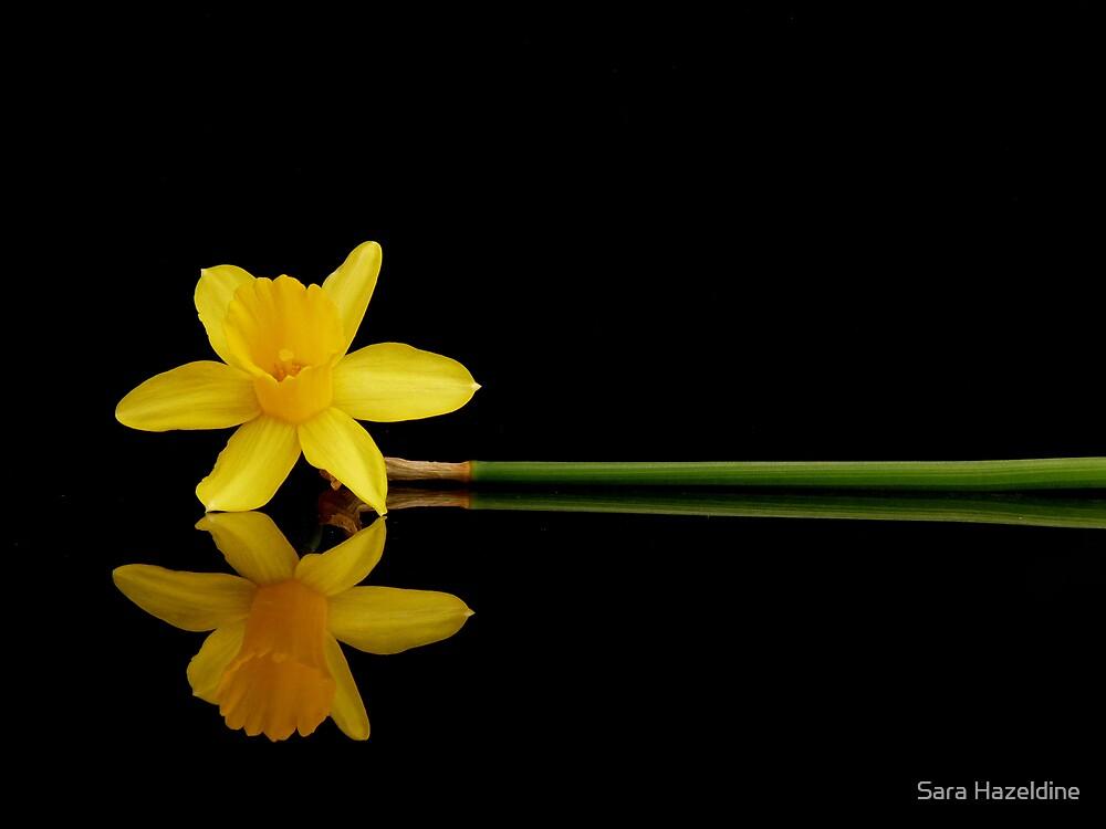 Daffodil reflected by Sara Hazeldine