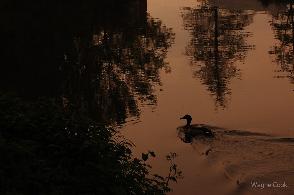 Duck on Water, we need no introduck-sion :)) by Wayne Cook