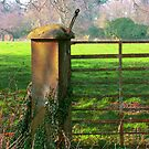 Country Gate by Orla Cahill