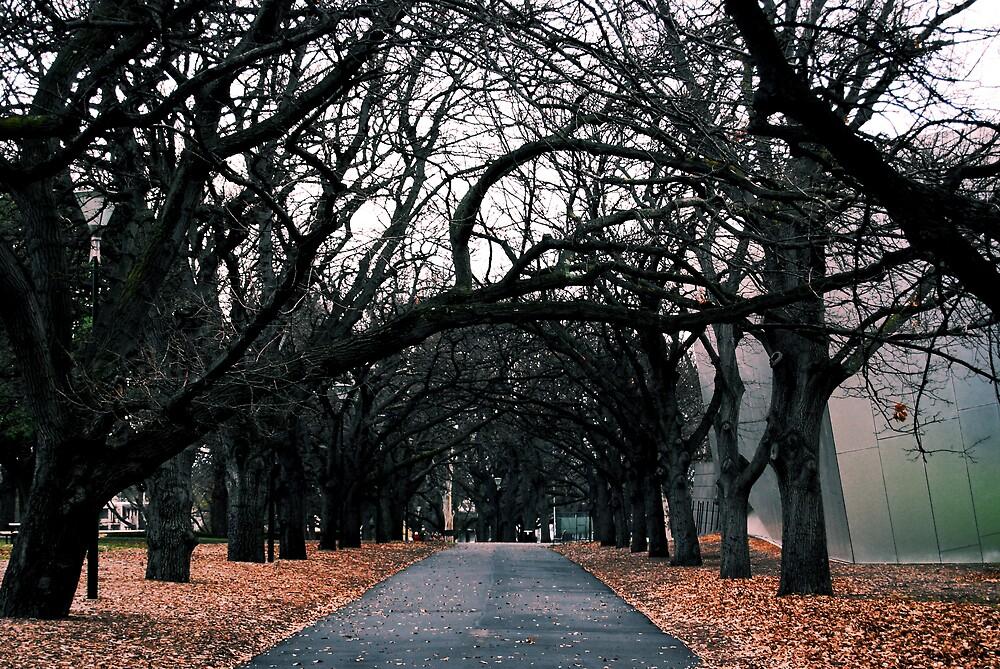 Winter Walk by JaredWoods