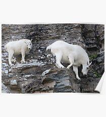 Rock Climbing Family Poster