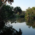 Florida morning by dhjorleifsson