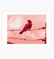Bird on the Wire Art Print