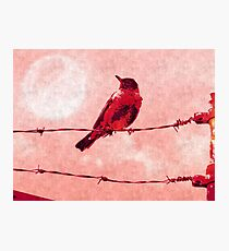 Bird on the Wire Photographic Print