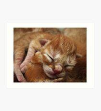 Newborn Kitten Sleeping Art Print