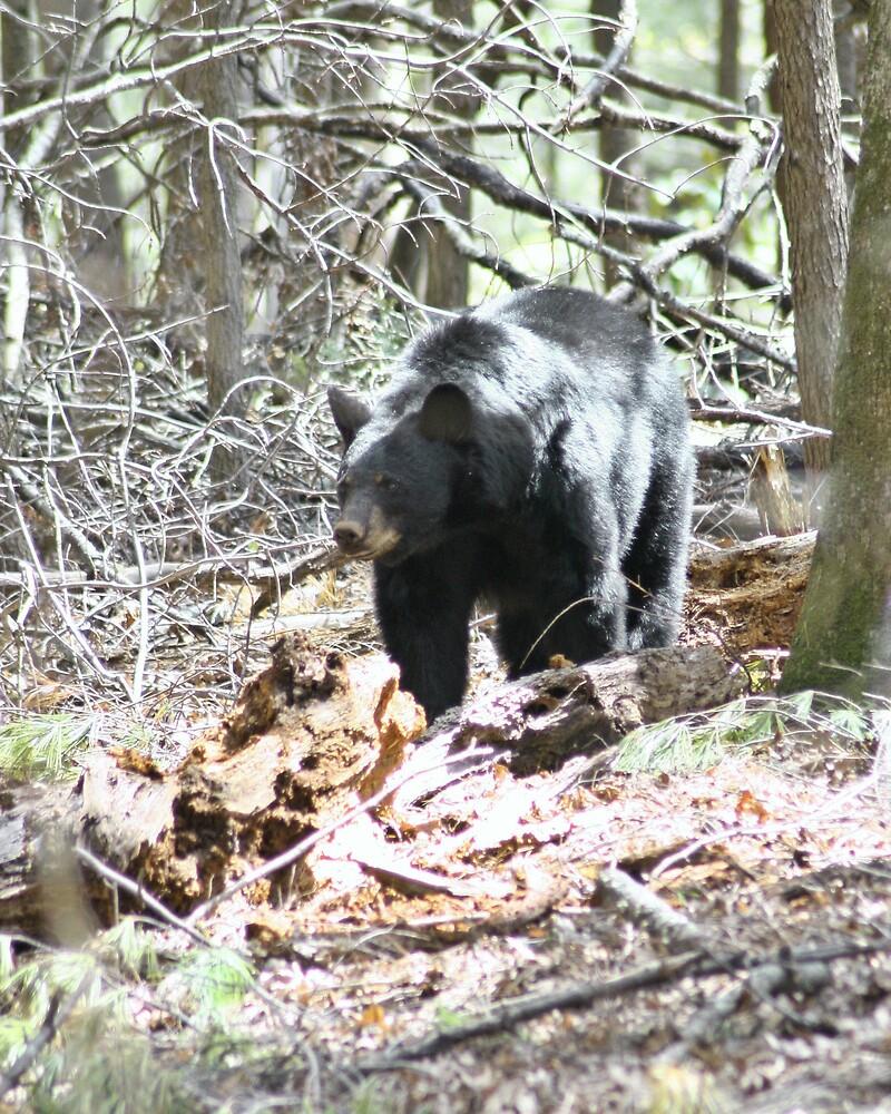 Tennessee Black Bear by Lori Walton