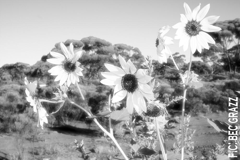 sunflowers by becgrazz
