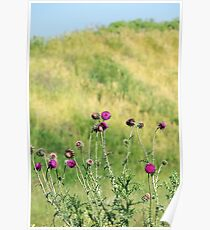 burdock flowers with bees spring season Poster