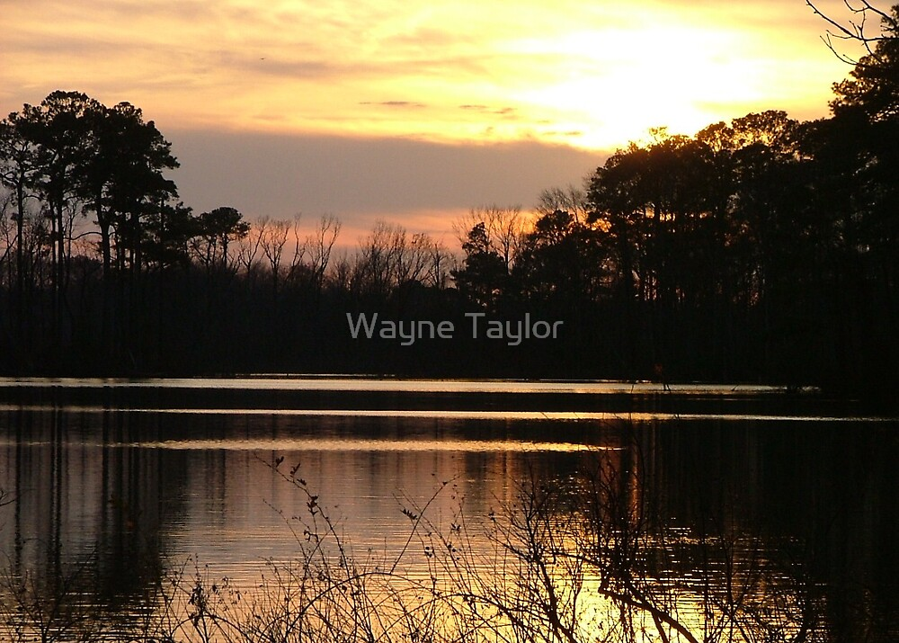 Botanical Sunset by Wayne Taylor