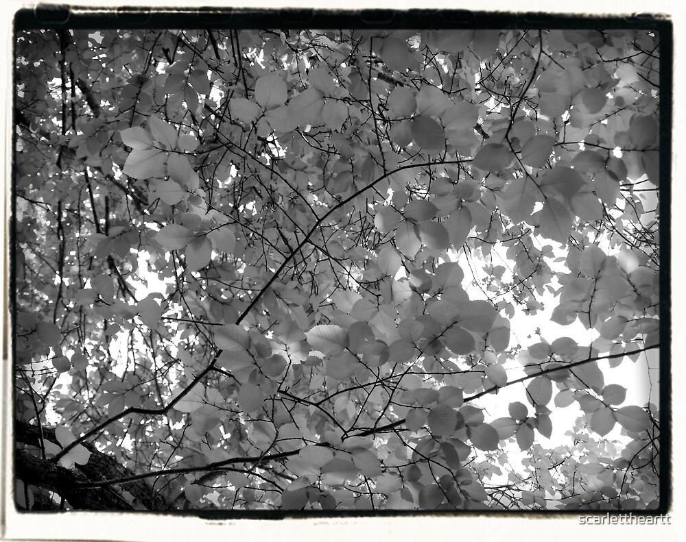 in the treetops by scarlettheartt