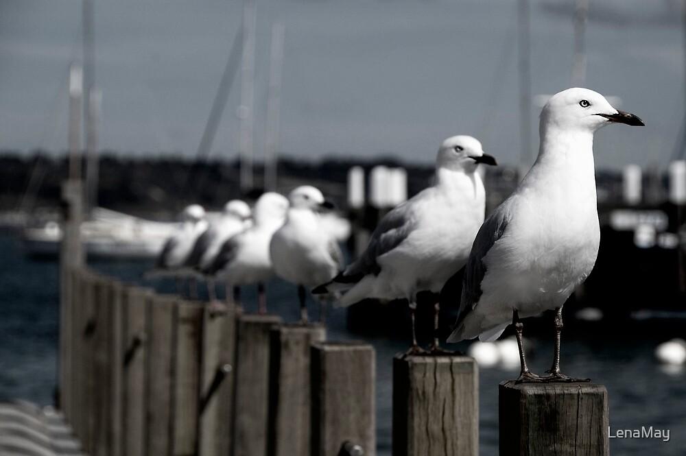 gulls by LenaMay