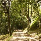 «Monte del Naranco, Oviedo» de susanalf