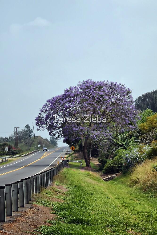Jacaranda Tree by Teresa Zieba