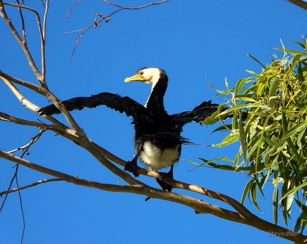 High Bird by stevealder