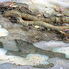 Salamander on Ice by Shelley Heath