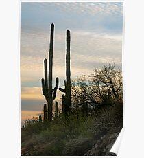 Tucson, Arizona - 2009 Poster