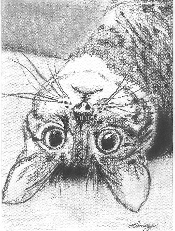 Flibble's Kitty by Laney ...