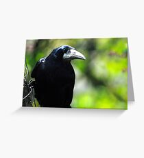 Rook on feeder Greeting Card