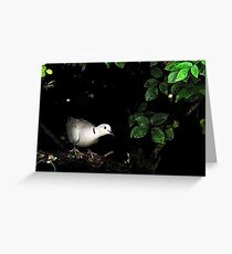 Collar dove peeks from hedge Greeting Card