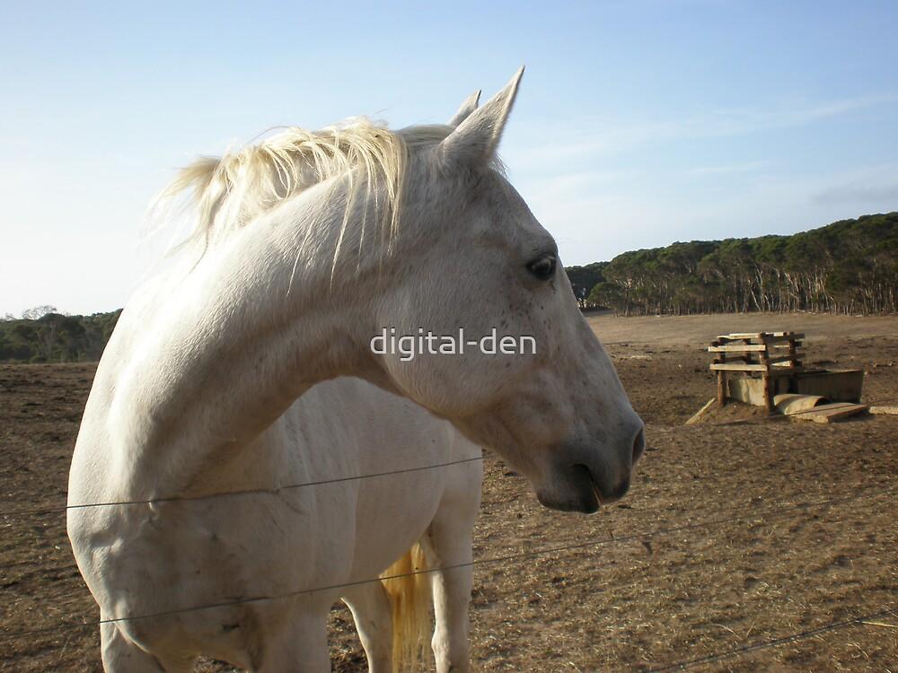 Horse Play by digital-den