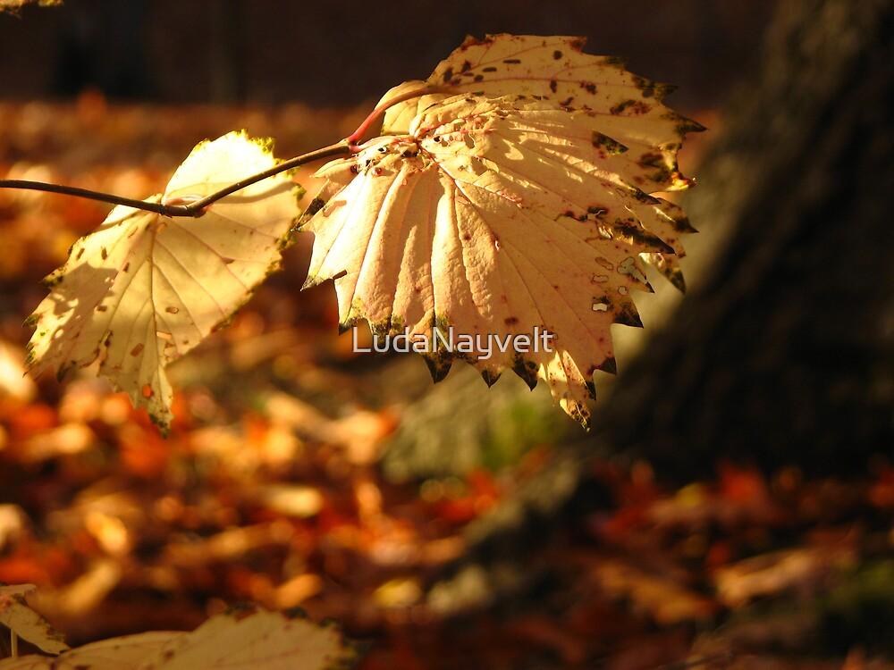 Burning colors of fall by LudaNayvelt