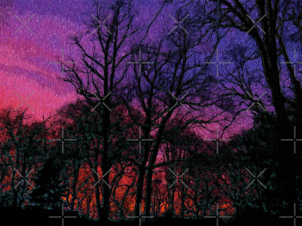 Forest at sundown by Gal Lo Leggio