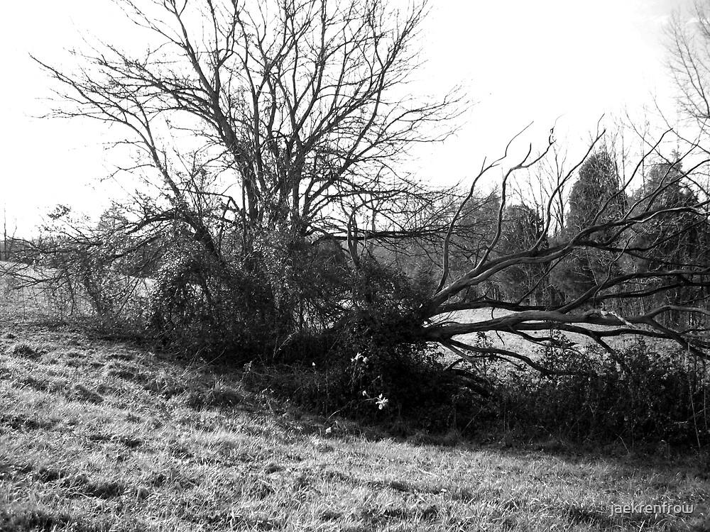 Witch's Tree by jaekrenfrow