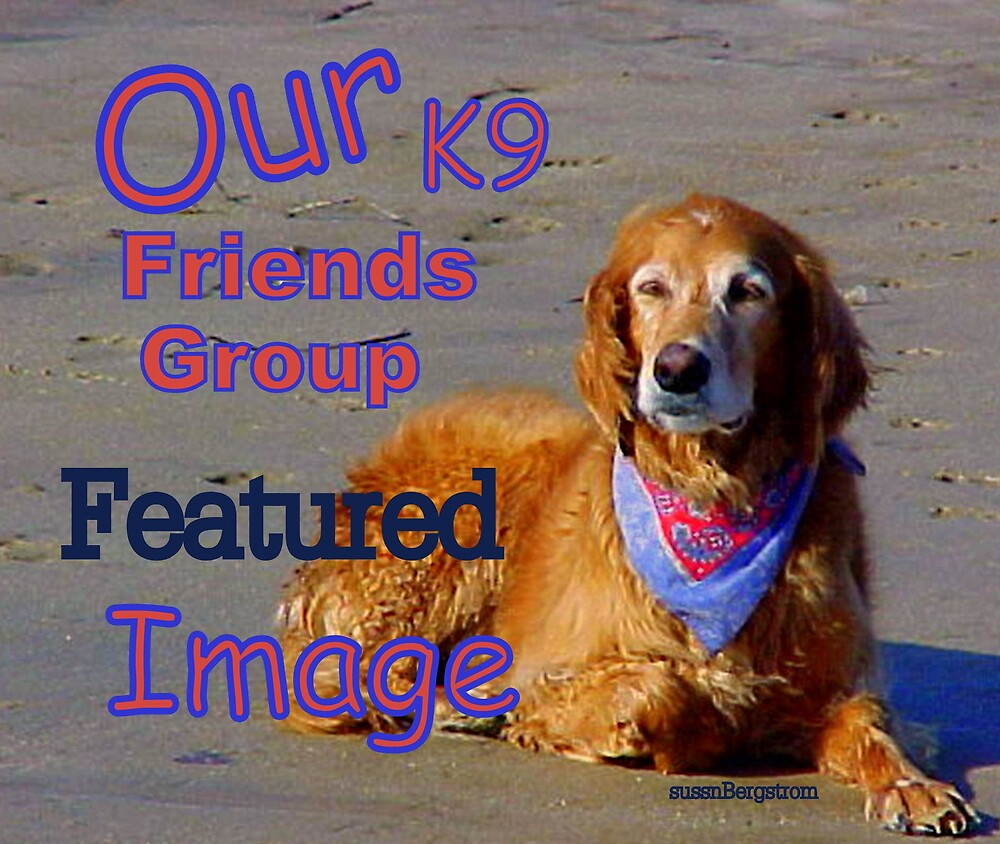 K9 Friends Group Feature Banner by Susan McKenzie Bergstrom
