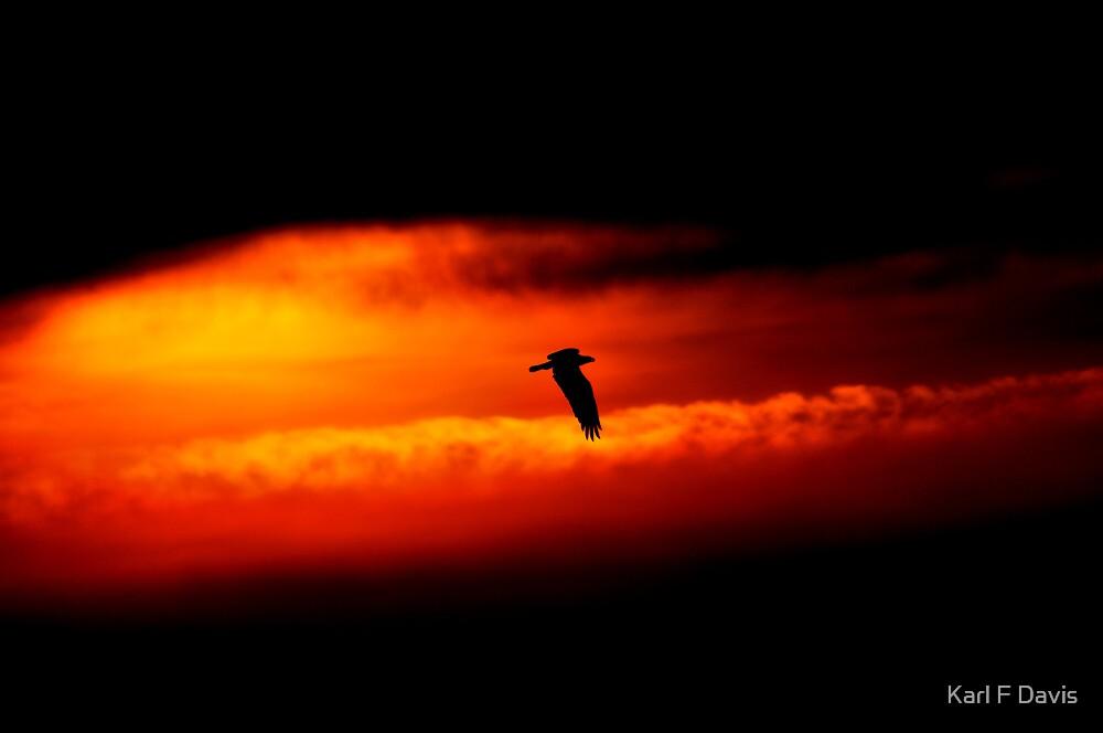 SunBird by Karl F Davis