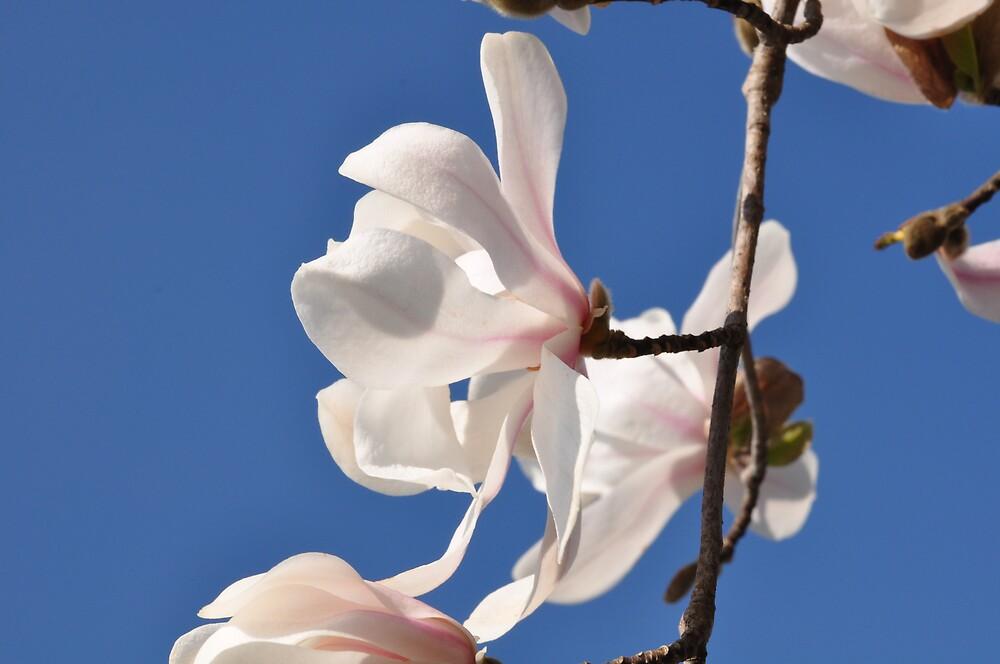 flowers by ilarib