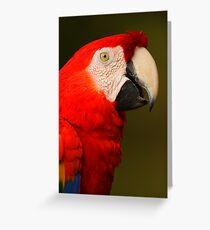 Scarlet Macaw Portrait Greeting Card