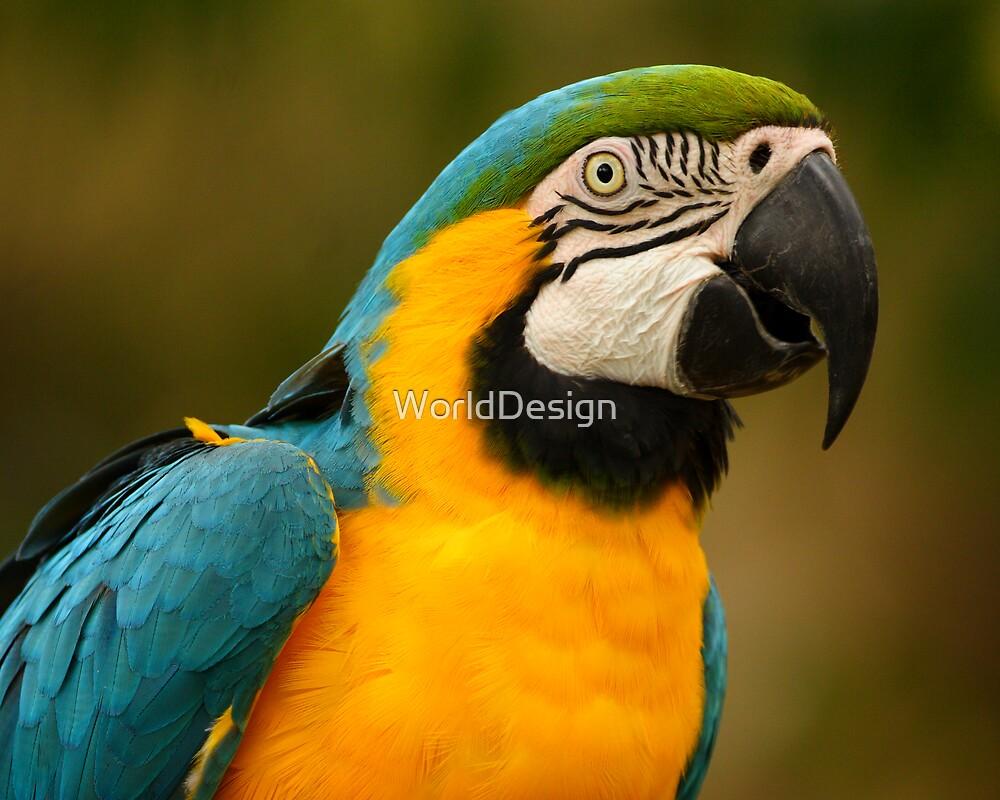 Blue & Yellow Macaw Portrait by WorldDesign