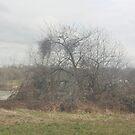 a forgotten tree by memaggie