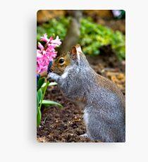 Playful squirrel Canvas Print