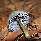 A blue shroom  by jack01