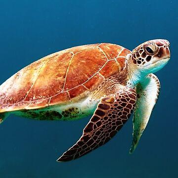 HAWAIAN SEA TURTLE SOMMER OCEAN PRINT von budgetnudest