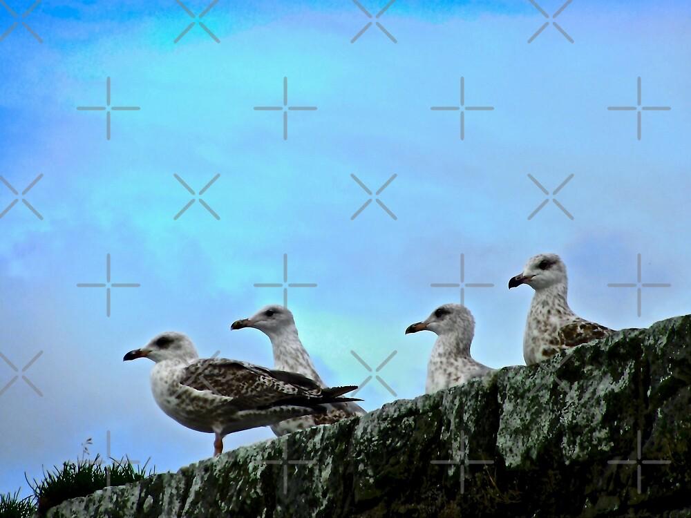 Milk Harbour Seagulls, Sligo, Ireland by Shulie1
