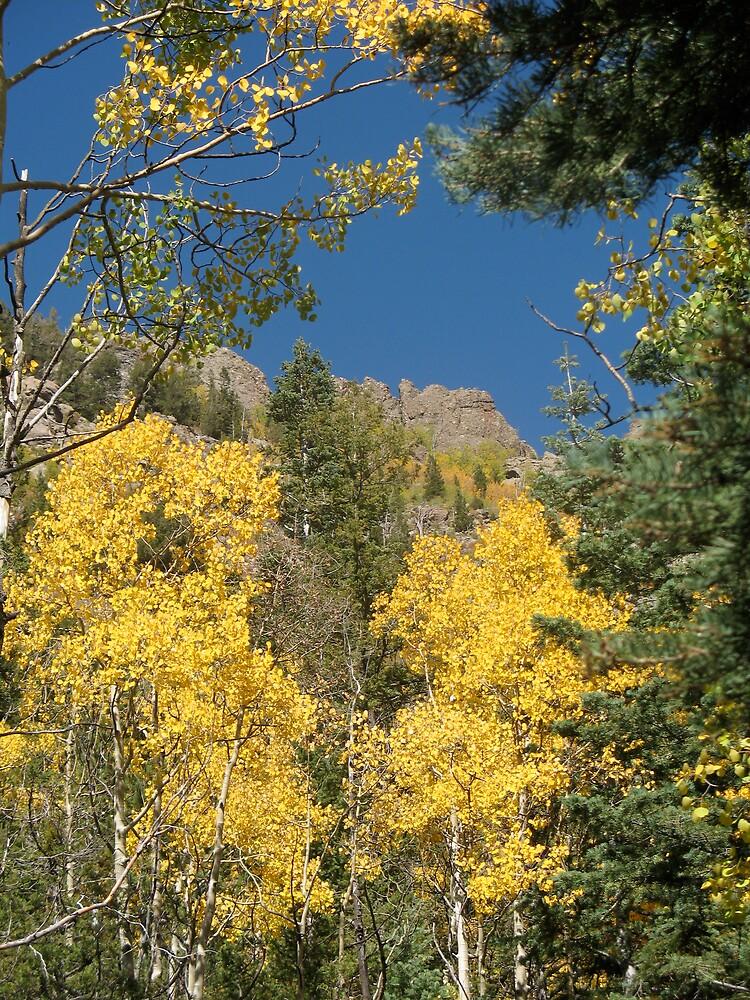 Colorado Aspen by doctorharrison