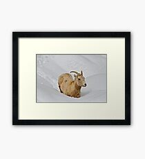 Surprise Spring Snowstorm Framed Print