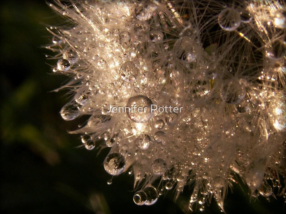 Light and Dew by Jennifer Potter