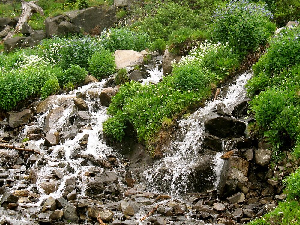 Rocky Mountain Streams by doctorharrison