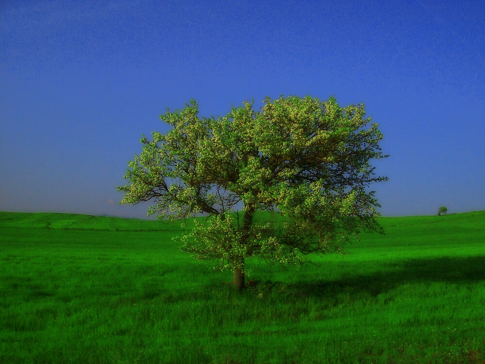 TREE by karmadesigner