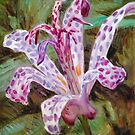 Tricyrtis by HDPotwin