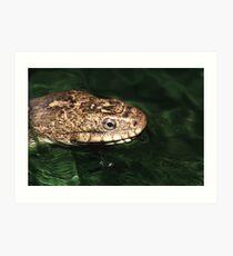 Water Snake Art Print
