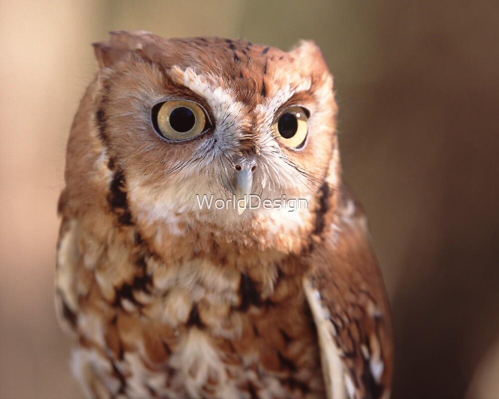 Screech Owl Portrait by WorldDesign